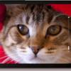 ASUS ZenFone 4 , HP Android Murah Terbaik 2014