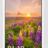 Daftar Harga Smartphone OPPO September 2014